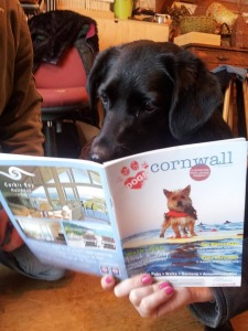 Dogs love Cornwall