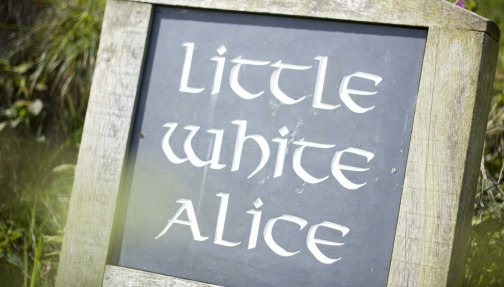 Little White Alice - Your wild Cornish Retreat